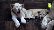Zoo nursery : Berlin